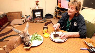 A kangaroo eating Vegemite. Because some stereotypes are too good to ignore!