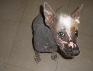 A frightening animal.