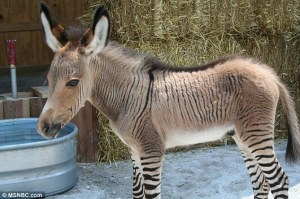 """Would an Ippo the Zonkey by any other name be so friggin' adorable?!?"" - Bill Fakespeare"
