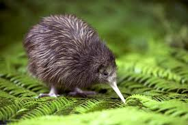 A Kiwi, earlier.