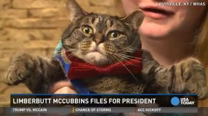 Cat president and his name is limberbutt