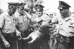 Pig President